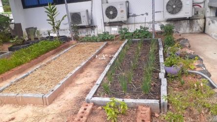 ปลูกพืชผักสวนครัวสร้างความมั่นคงทางอาหารในครัวเรือน_10