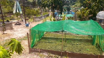 ปลูกพืชผักสวนครัวสร้างความมั่นคงทางอาหารในครัวเรือน_4