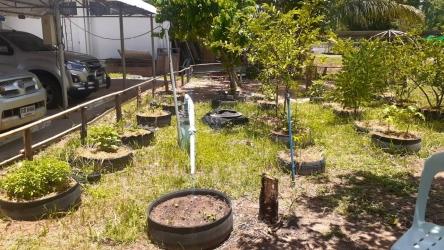 ปลูกพืชผักสวนครัวสร้างความมั่นคงทางอาหารในครัวเรือน_5