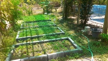 ปลูกพืชผักสวนครัวสร้างความมั่นคงทางอาหารในครัวเรือน_7