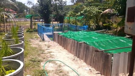 ปลูกพืชผักสวนครัวสร้างความมั่นคงทางอาหารในครัวเรือน_8