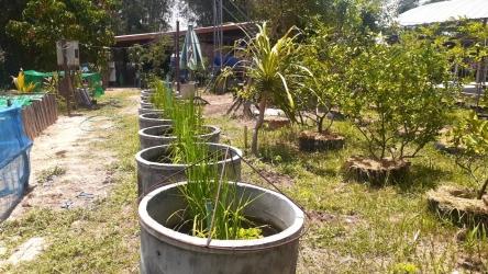 ปลูกพืชผักสวนครัวสร้างความมั่นคงทางอาหารในครัวเรือน_9